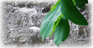 More About Intentional Living - Leaves and running water